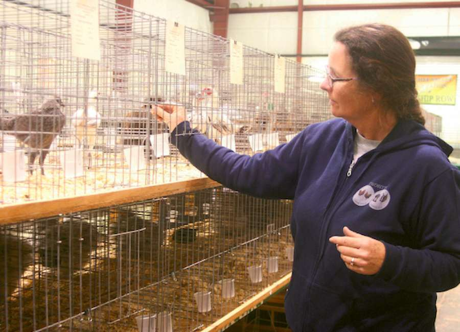Annual Poultry Show held at fairgrounds - The Newnan Times