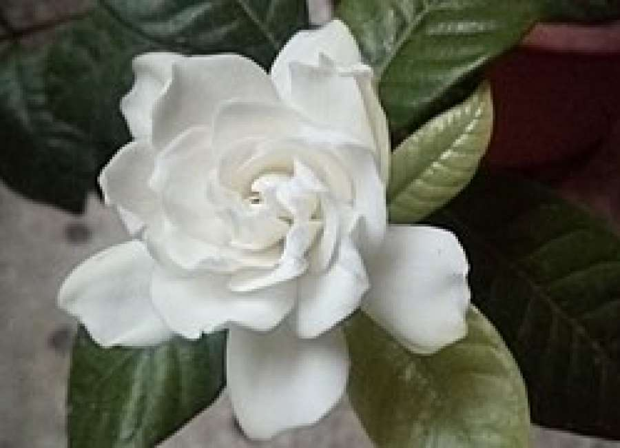 Master Gardeners To Hold Plant Sale On Oct 7 The Newnan Times Herald