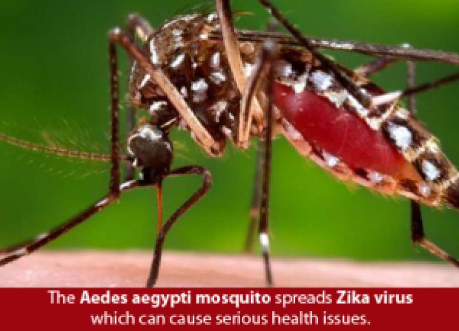 No locally transmitted Zika cases
