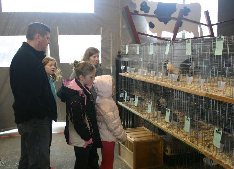 Poultry show Saturday at Fairgrounds