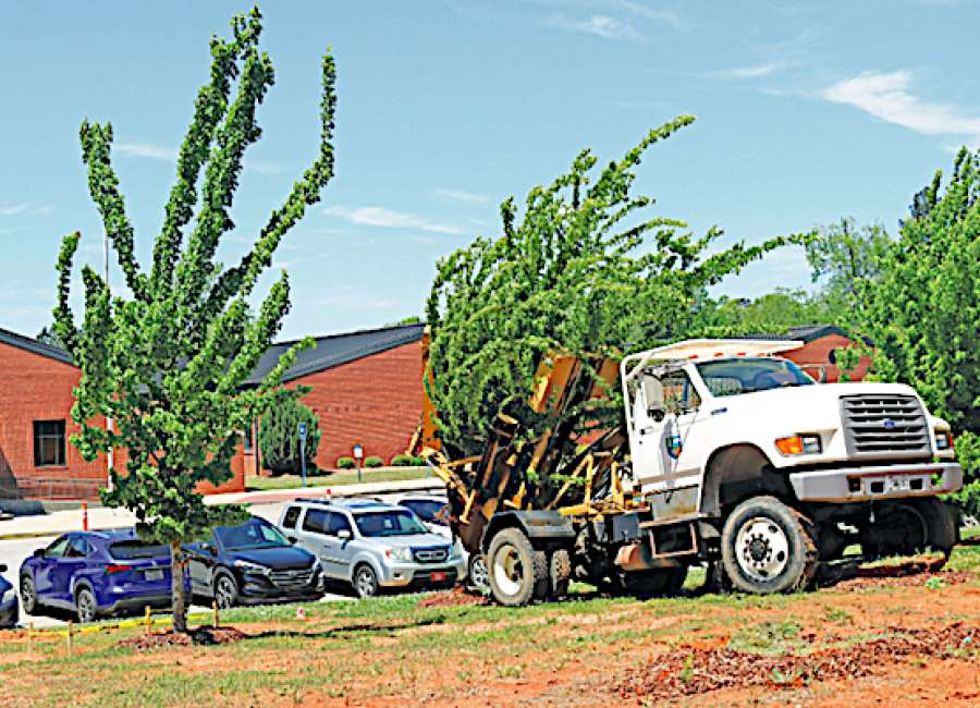 Trees being moved to make room for parking