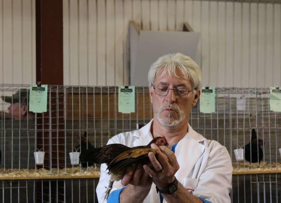 Birds compete at 16th annual Chattahoochee Valley Poultry Show